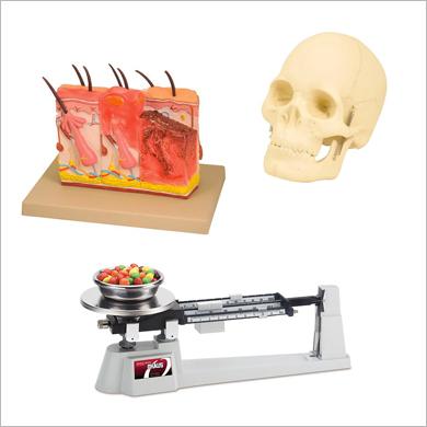 Anatomy / Educational