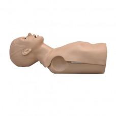CPR Torso Simulator