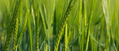 Agriculture & Végétaux
