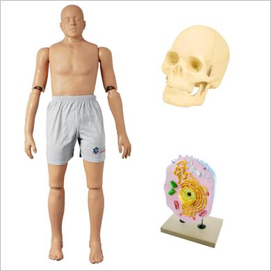 Modèles anatomiques et mannequins