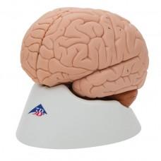 Modèle classique du cerveau humain