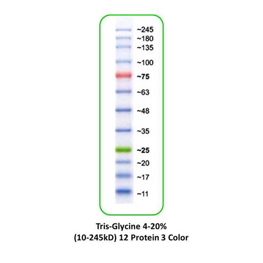 Échelles de marqueurs protéiques