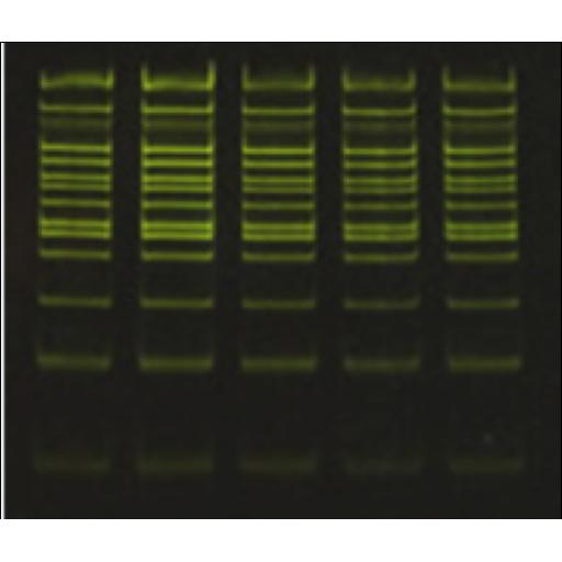 Colorant sécuritaire pour ADN