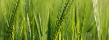 Agriculture-plants-Geneq-Biotechnology.jpg